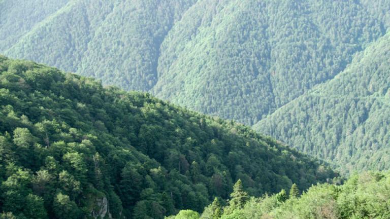 """Вековни букови гори в """"Централен Балкан"""" стават част от ЮНЕСКО"""