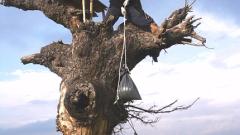 Еколози в помощ на царския орел