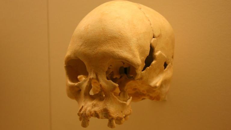 Череп на 11 000 г. е оцелял след пожара в бразилския Национален музей