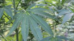 Джо Байдън намекна за легализация на марихуаната