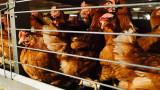 Кампания за защита на животните обедини над един милион европейци