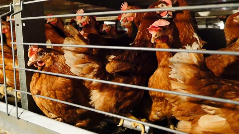 Вземат мерки против птичия грип в Добрич
