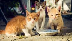 79-годишна е осъдена на 10 дни затвор за хранене на улични котки в САЩ