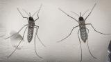 Дават над 1 млн. евро за 2 години за насекомите по Дунав