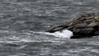 Рибните запаси в Черно море драстично намалели, нужни са спешни мерки
