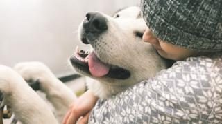Обичаме ли кучетата повече от хората