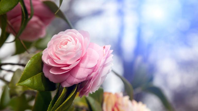 Ето каква енергия получаваме от стайните цветя (СНИМКИ )