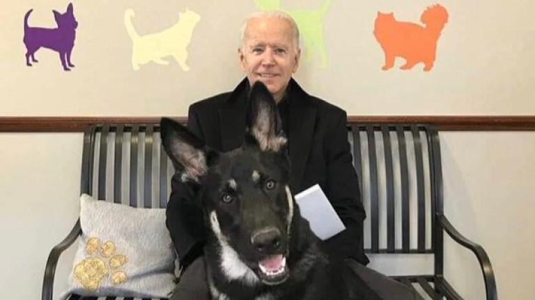 Кучетата отново превземат Белия дом