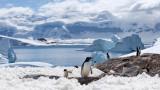 Антарктика е на път да стане най-големият резерват в света