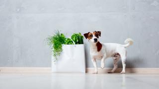 Кучетата и забранените храни