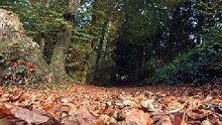 Залесяват 4000 дка. гори в Сливенско