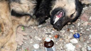 Нетът отсече – съд и затвор за мъчителите и убийци на животни
