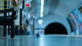 Wildlife Photography Awards и снимката на биещите се мишки в лондонското метро