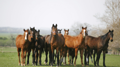 Безстопанствени коне пакостят на стопани в Ловешко