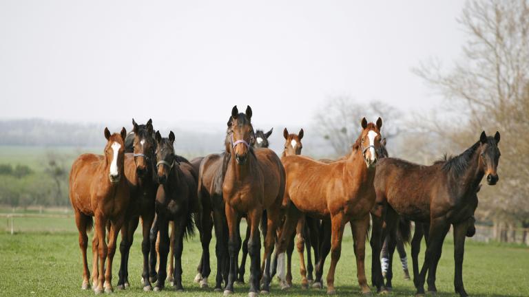 Над 20 коня са простреляни през изминалата седмица в Правец