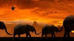 Яздене на слонове и други грешки, които опитните пътници все още правят
