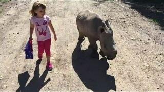 Дете се сприятели с бебе носорог (Видео)