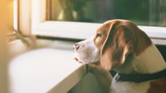 Как кучето да е спокойно, докато не сме вкъщи
