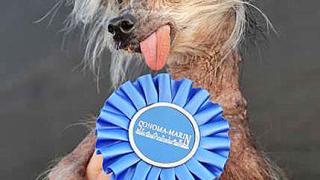 Умря най-уродливото куче в света