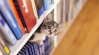 Как да организираме домашната библиотека