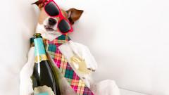 За смесването на алкохолни напитки и махмурлука