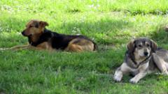 Безплатно кастрират кучета и котки в Брезник