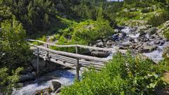 Без сеч в Пирин - обещава новият план за управление на парка