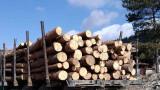 Горски задържаха 250 кубика незаконна дървесина в хода на масови проверки