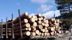 Масови кражби на дървесина от сечище край Тетевен