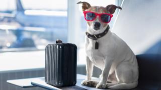 Как и къде да пътуваме с куче в Европа
