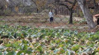 Земеделци настояват за спешни мерки от администрацията, за да не търпят санкции