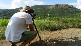 Над 70 белоглави лешоядчета се излюпиха в Източните Родопи