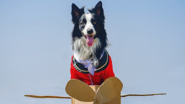 Кучето, което ни учи как да си живеем живота