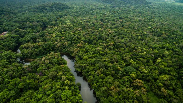 Глобална трагедия - девствените гори на Земята изчезват все по-бързо