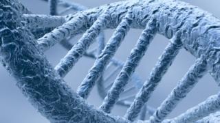 Учени коригираха ДНК в ембрион