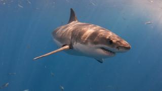 Акула издърпа 10-годишно момче от рибарска лодка в Австралия