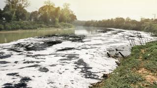 Протест срещу изсичането на дървета по поречието на река Искър