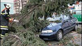 Ураганни ветрове изкорениха над 80 дървета в Киев