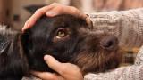 4 305 бездомни кучета в страната са намерили дом