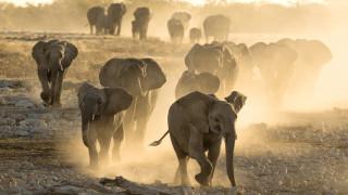 Разпродажба на слонове