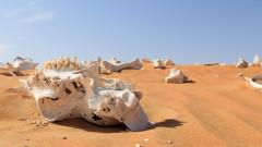 Хората са заличили 83% от дивите бозайници