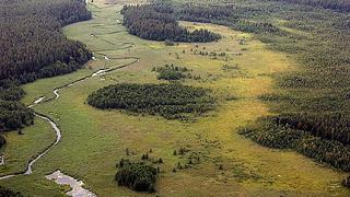 Брюксел забранява път в защитена местност в Полша