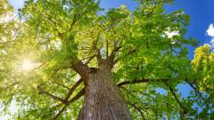 Едно дърво хлад (не) прави