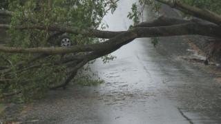Силен вятър събори дървета по главните пътища в Северна България