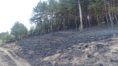 Над 230 горски пожара от началото на годината у нас