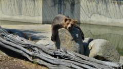 Българските зоопаркове - кога ли ще влязат и те в ЕС?