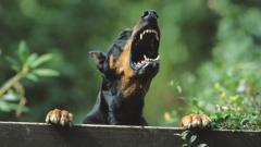 """""""Четири лапи"""" удря рамо на полицията в борбата с насилието над животни"""