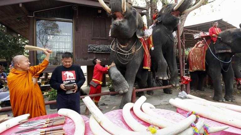 Европа да забрани търговията с предмети от слонова кост, призова наш евродепутат