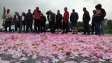 В Стрелча няма да празнуват Празника на розата