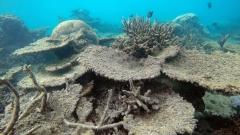Четвърти турист загина при Големия бариерен риф в Австралия